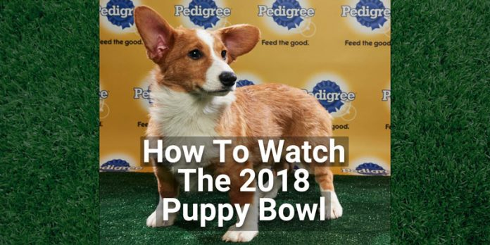 how-to-watch-the-2018-puppy-bowl