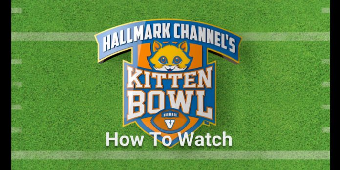 how-to-watch-the-kitten-bowl