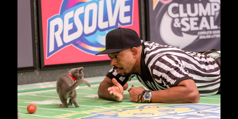 Hallmark Channel S Kitten Bowl How To Watch Cut The Cord